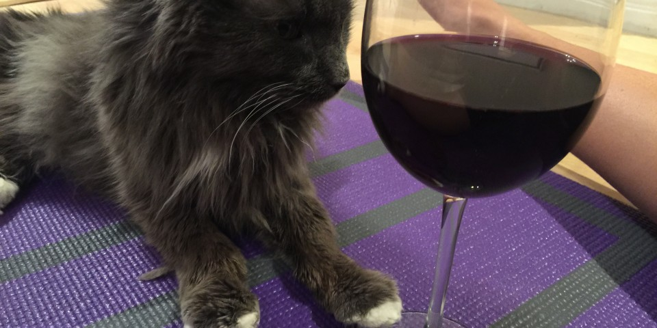 wine yoga and cats