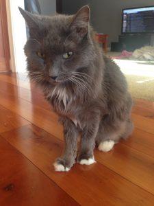 my late pet cat socrates